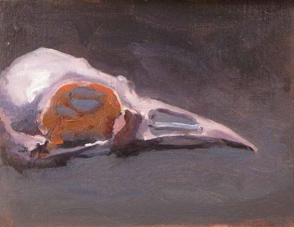 Bird skullawb